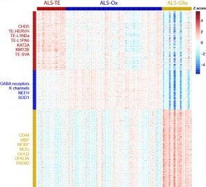 ALS_subtype